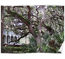Live Oaks, St. Augustine Poster