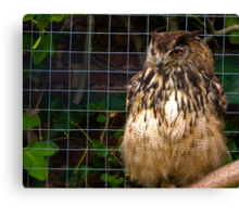 Owl #1 Canvas Print