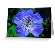 The Geranium Greeting Card