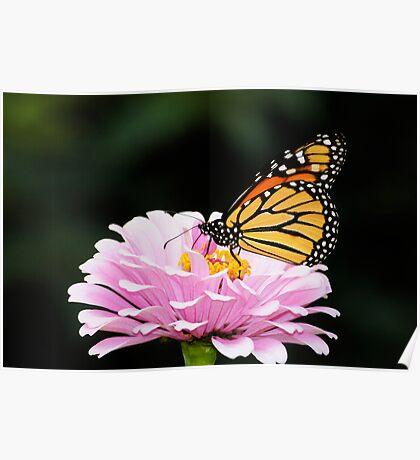 A FLOWER ROMANCE -III- Poster