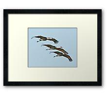 Sandhill Cranes in Flight Framed Print