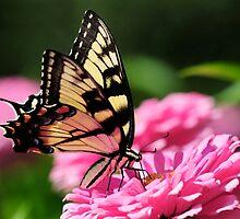 A FLOWER ROMANCE -VI-  by mc27