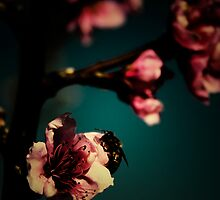 Retro Blossom (3) by catherine bosman