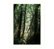 Forest Rays - Gayasan National Park, South Korea Art Print