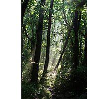 Forest Rays - Gayasan National Park, South Korea Photographic Print