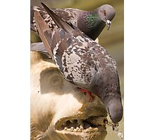 pigeon drinking water from a fountain Photographic Print