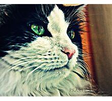 A Pretty Kitty  Photographic Print