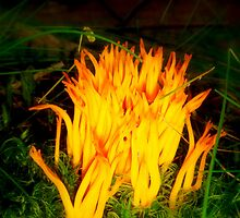 Flame in the forest.. by Eugenio