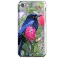 Australian Birdlife - Spangled Drongo iPhone Case/Skin