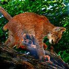 Baby Lynx by Larry Trupp