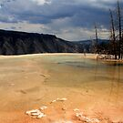 Infinity Pool, Mammoth Hot Springs by Vivek Bakshi