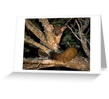 Greater Bushbaby Greeting Card