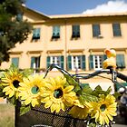 Sunflowers on bike in Levanto, Italy by Ian Middleton