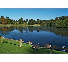 Lake with Waterfowl Photographic Print