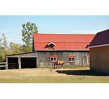 Red-Roofed Barn & Occupant Photographic Print