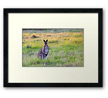 Wallaby Framed Print