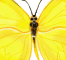 Yellow Butterfly Sticker