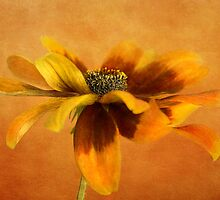 Hot Rudbeckia by Mandy Disher