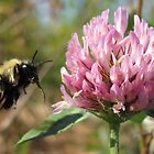 honey bee tongue by cherylsnake