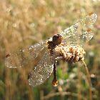 Dewey Dragonfly by cherylsnake