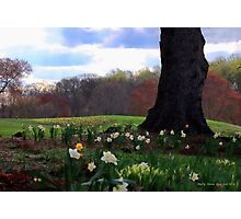 Springing Forward at Edgemont Golf Course Photographic Print