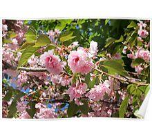 Boston Flowers Poster