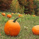 Pumpkin Picking by jehnner