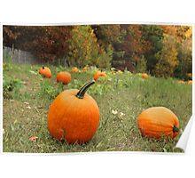 Pumpkin Picking Poster