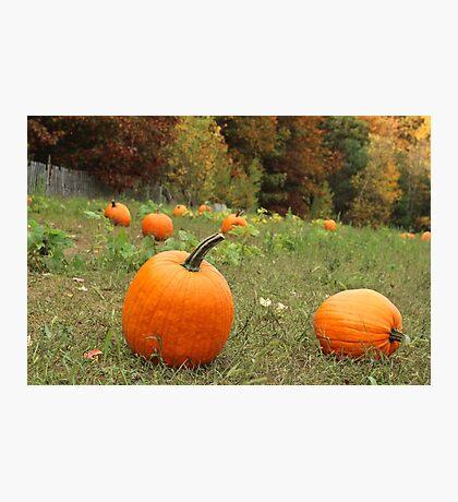 Pumpkin Picking Photographic Print