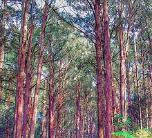 Forrest Walk - Yarra Ranges National Park - The HDR Experience by Philip Johnson