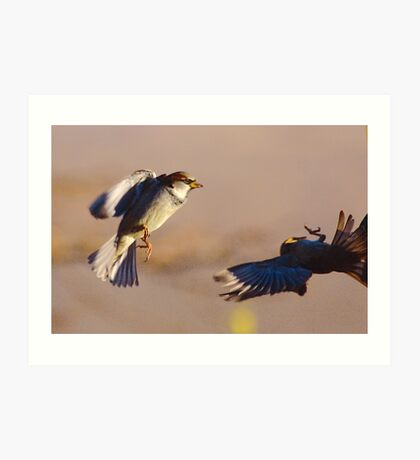 House Sparrow Acrobatics Art Print