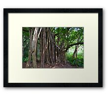 Under the Banyan Framed Print