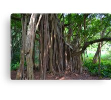 Under the Banyan Canvas Print