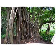 Under the Banyan Poster