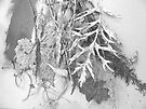 High/Key/Plant/Debris by evon ski