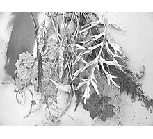 High/Key/Plant/Debris Photographic Print