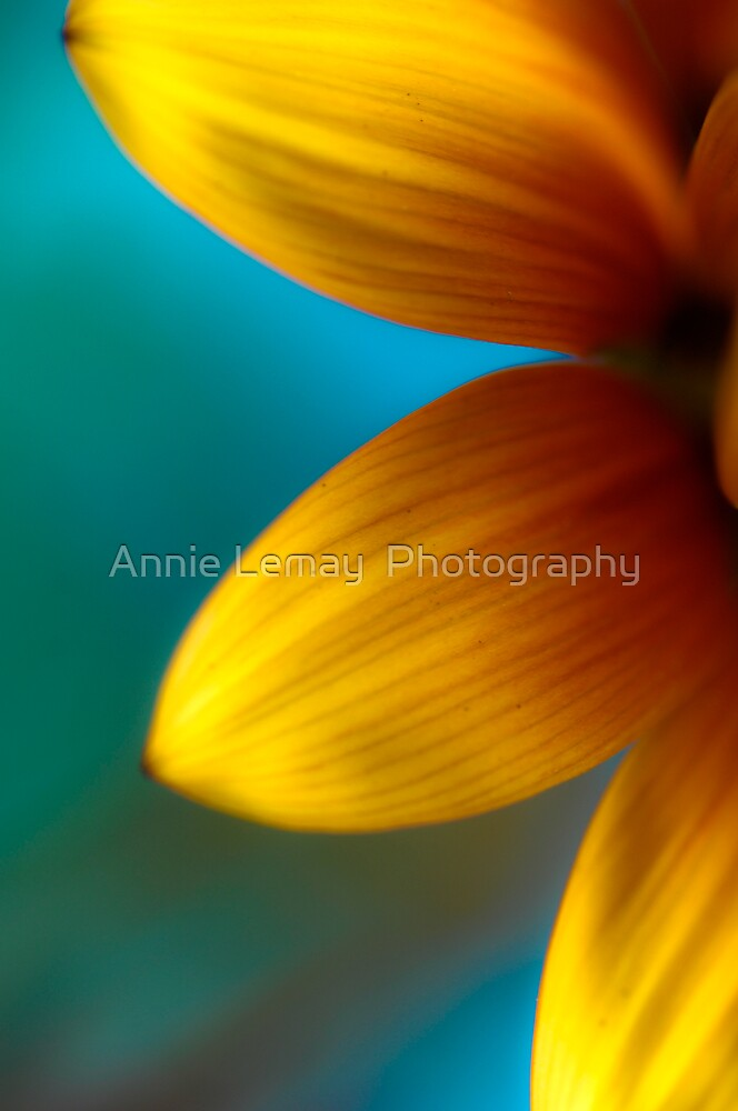 Ashley's Flower by Annie Lemay  Photography