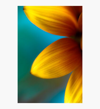 Ashley's Flower Photographic Print