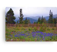 Mountain Meadow in Purple Canvas Print