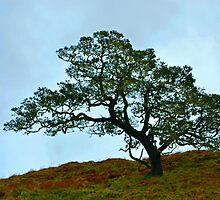 Lone Tree by Leona Bessey