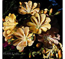 Sweet little yellow flowers Photographic Print