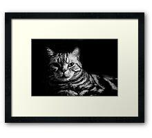 Spike Black and White Framed Print