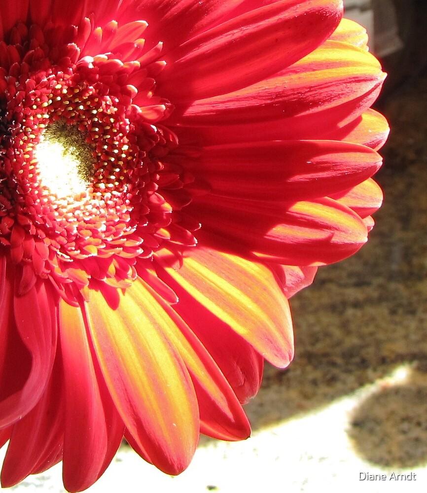 Some Vibrancy by Diane Arndt