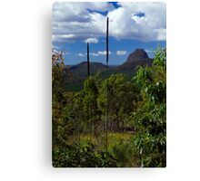 Grass tree lookout Canvas Print