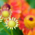 Powis Color by Christopher Bookholt