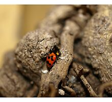 Lady beetle by Jason Dymock Photography