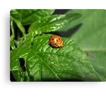 Fake Lady Beetle Metal Print