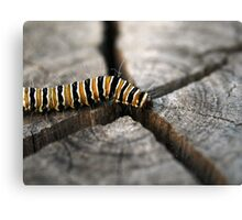 On the way to Butterfly Canvas Print