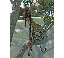 Serengeti Leopard Kill, Tanzania, Africa Photographic Print