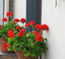 Geraniums on the Doorstep, York PA by Betty Mackey